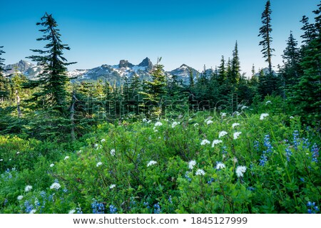 спокойный парка пруд Полевые цветы пышный зеленый Сток-фото © juniart