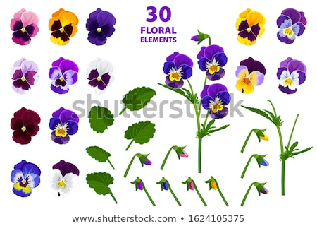 viola flowers watercolor Stock photo © artibelka