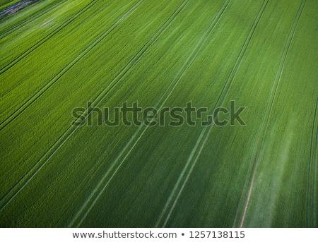 Powyżej antena obraz bujny zielone Zdjęcia stock © lightpoet