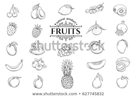 Stock fotó: Gyümölcs · szett · izolált · étel · művészet · citrom