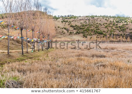 Foto stock: Tibete · pinho · floresta · natureza · fundo · montanha