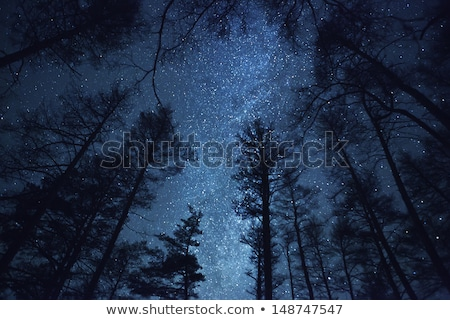 Winter nacht eenzaam klein huis Stockfoto © Onyshchenko