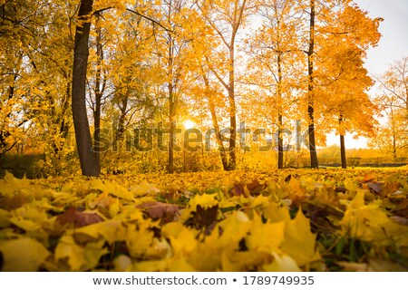 Linden alley in autumn. Shallow depth of field Stock photo © g215