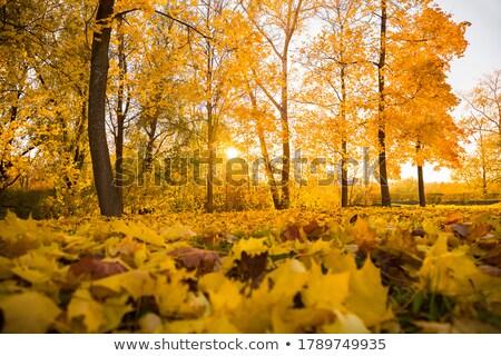 Geçit sonbahar sığ alan orman Stok fotoğraf © g215