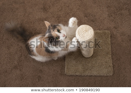 猫 · ポスト · 成人 · リビングルーム · 女性 - ストックフォト © icemanj