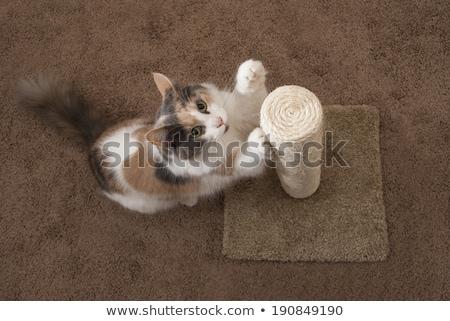 Cat using scratching post Stock photo © icemanj