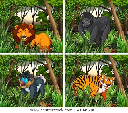 goril · yaşayan · orman · örnek · manzara · arka · plan - stok fotoğraf © bluering