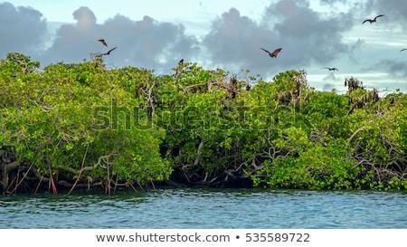 Mangrove in Indonesia Stock photo © dutourdumonde