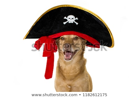 Stock photo: mixedbreed dog portrait in white background