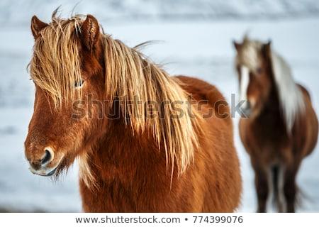 馬 · 2 · ファーム · 動物 · スタジオ · 孤立した - ストックフォト © kb-photodesign