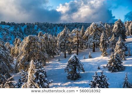 Pittoresque hiver paysage ciel bleu montagnes Chypre Photo stock © Kirill_M