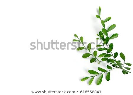 листьев · белый · лет · шаблон · природного · изолированный - Сток-фото © artrachen