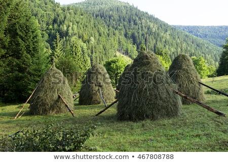 Secar feno montanha prado outono Foto stock © Kotenko