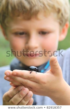 A young boy holding a beetle Stock photo © IS2
