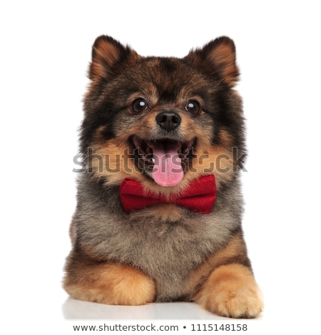 счастливым джентльмен коричневый брюки собака красный Сток-фото © feedough