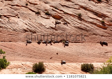 Grand Canyon with bighorn sheep resting on rocks   Stock photo © tab62