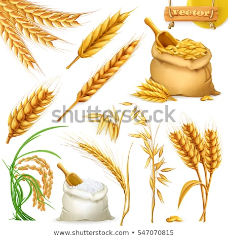 Barley Sack Grain Illustration Stock photo © lenm