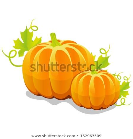 Twee vector pompoenen groene bladeren rijp geïsoleerd Stockfoto © TasiPas
