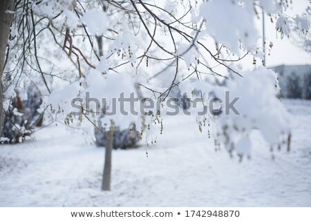 Severe winter view with snow and ice Stock photo © Kotenko