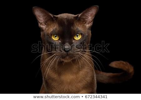 Foto stock: Vista · lateral · adorable · gato · sesión · blanco