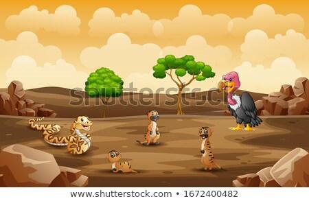 meerkat living in dry land stock photo © colematt