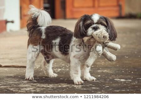 Adorável peludo sessão branco fundo brinquedo Foto stock © feedough