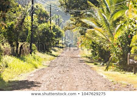 Costa Rica carretera forestales naturaleza paisaje verde Foto stock © Lopolo