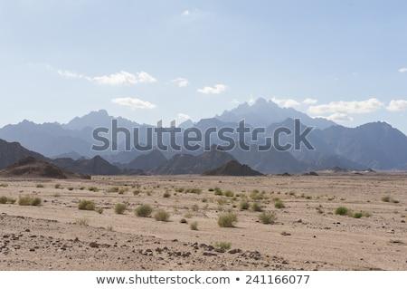 Egípcio deserto pôr do sol verão céu sol Foto stock © Givaga