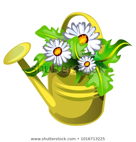flower pot in the shape of a watering can yellow color with flowers daisies isolated on white backgr stock photo © lady-luck