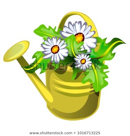Forme arrosoir jaune couleur fleurs Photo stock © Lady-Luck