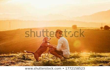 Man play with his Beagle dog on a field at summer time Stock photo © Lopolo
