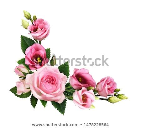 Esquina rosas blanco aumentó naturaleza hoja Foto stock © ElenaShow