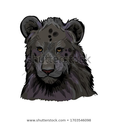 Testa leone peloso cappotto isolato Foto d'archivio © robuart