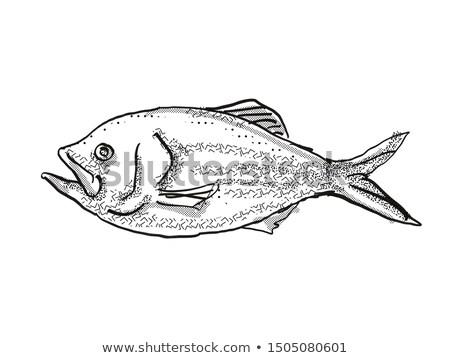Golden Snapper New Zealand Fish Cartoon Retro Drawing Stock photo © patrimonio