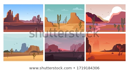 Avond cactus vallei zonsondergang Mexicaanse woestijn Stockfoto © liolle