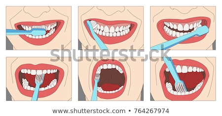 close up of woman with toothbrush cleaning teeth Stock photo © dolgachov