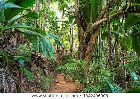 coco-de-mer, Vallée de Mai, Praslin, Seychelles Stock photo © phbcz