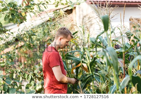 Vegetable ripeness assessment Stock photo © AGorohov