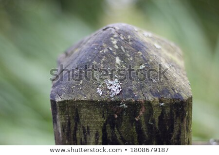 Green with damp, wooden fence Stock photo © pzaxe