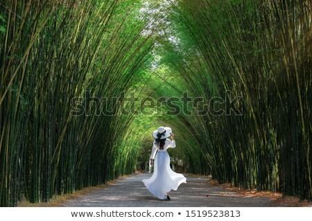 vert · naturelles · tunnel · arbre · amour · nature - photo stock © stoonn