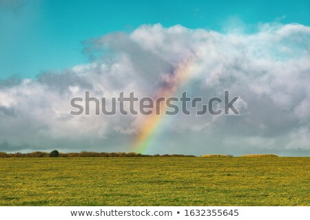 Grassland Under Water Stock photo © franky242