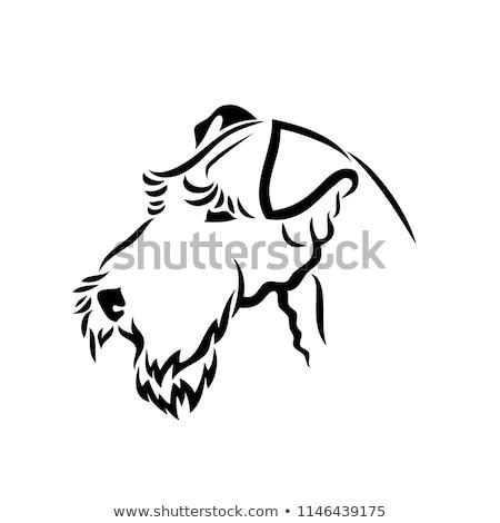 Terrier cane piedi guardando view isolato Foto d'archivio © eriklam