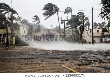 Fák áradás víz fa tájkép eső Stock fotó © njaj