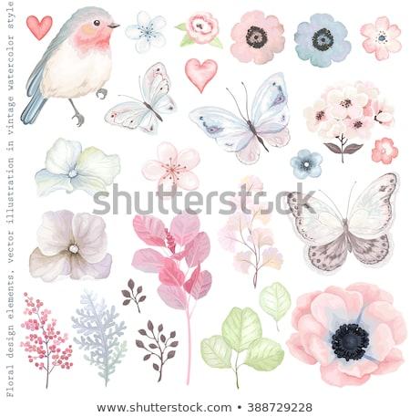 Coração flor pássaro conjunto natureza folha Foto stock © creative_stock