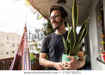 Terraced plant Stock photo © chatchai