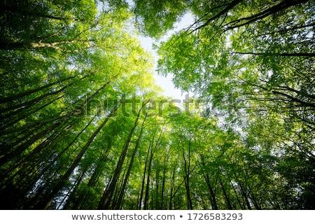 空 · 表示 · 落葉性の · 春 · 森林 · 風景 - ストックフォト © samsem