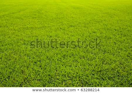 Green grass background texture straight  Stock photo © dacasdo