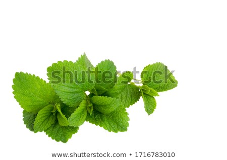 Twig of mint against white background Stock photo © wavebreak_media