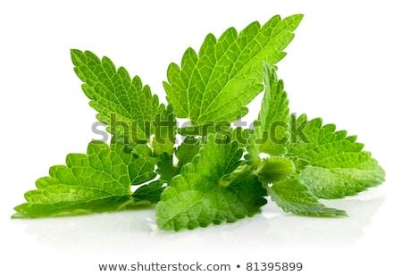 fresco · folha · verde · isolado · branco · comida · folha - foto stock © brulove