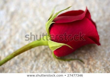 Red rose over old aged teak wood Stock photo © lunamarina